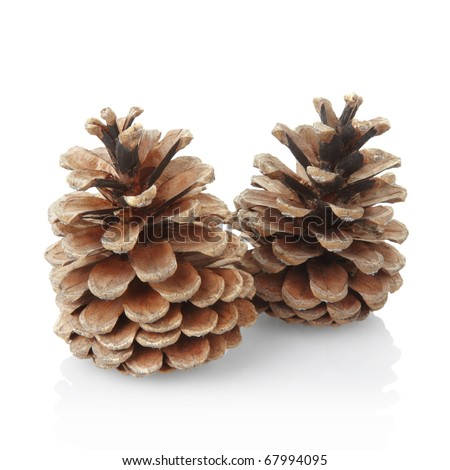 Pine cones isolated on white, clipping path included