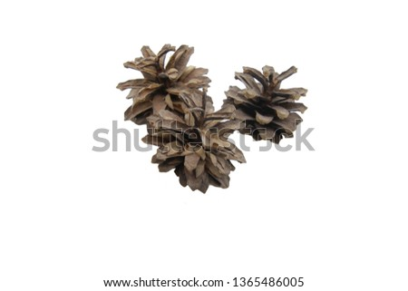 Pine cones on a white background. Can be used to illustrate texts, notes and other text materials. #1365486005