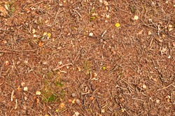 Pine cones, twigs and needles on forest ground
