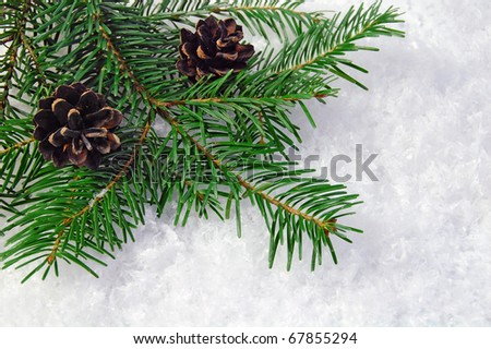 Pine cones with pine branches