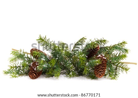 pine cones with pine branches. Cone and christmas tree isolated on white.