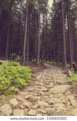 Pine forest and a path. Pine forest with a path. Forest path, scenic nature landscape. #1506835001