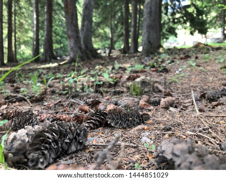 Pine forest and pine cones #1444851029