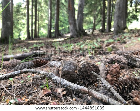 Pine forest and pine cones #1444851035