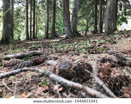 Pine forest and pine cones #1444851041