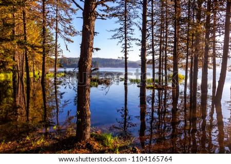 Pine Forest at Shiroka Polyana Lake in the morning #1104165764