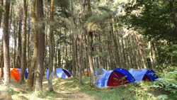pine forest camping ground in sentul west java, indonesia