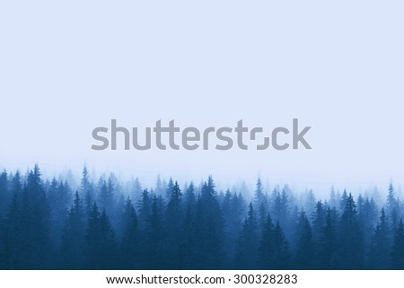 pine forest in mountains with fog  #300328283