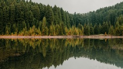 Pine Forest Lakeside Mirror Effect in Lagoa do Canário in Azores, Portugal