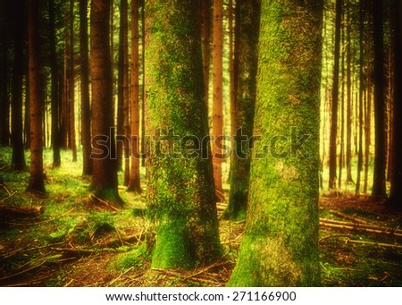 Pine forest landscape in spring. Camping and tourism concept.