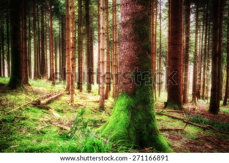 Pine forest landscape in spring. Camping and tourism concept. (diffused)