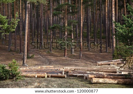 Pine forest logging.