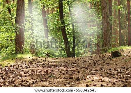 Image result for pine cones in woods