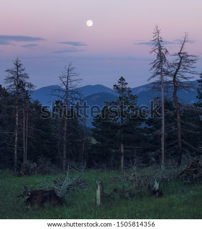 Pine forest of Rocky Mountain National Park at dusk backdropped by full moon and purple and pink sky #1505814356