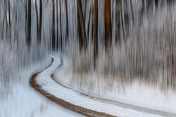 Pine forest, tree trunks on a winter day. The natural rhythm of tree trunks and shrub branches. A winding forest trail leads through the snowy forest. Blurred background. Latvia