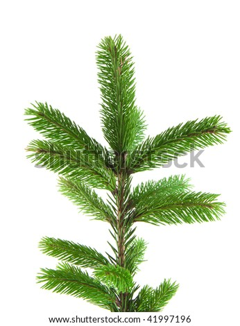 Pine fur tree branch isolated on white for Christmas decoration - Shutterstock ID 41997196