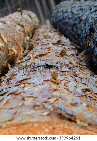 Pine logs. Focus is on bark. Shallow depth of field. #399964261