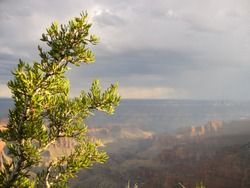 Pine manages to eek out a life exposed along the north rim of the Grand Canyon.