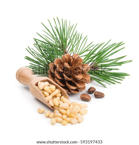 Pine nuts with branches and cones isolated on white #593197433