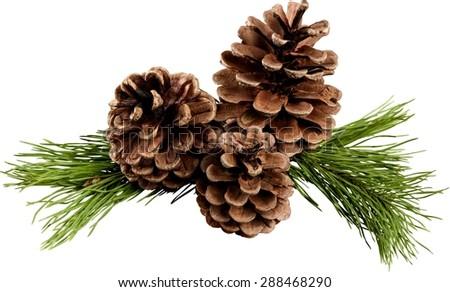 Pine, Pine Cone, Christmas Decoration. #288468290