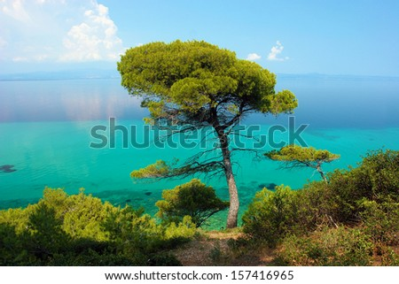 Pine tree against blue lagoon with turquoise sea