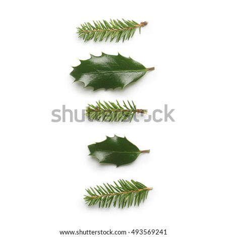 Pine tree and Holly berry leaves isolated on white background. #493569241