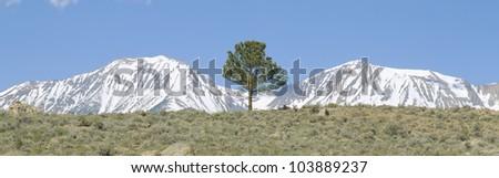 Pine tree and snow-covered Sierra Nevada Mountains near Mono Lake, California