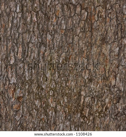 Pine Tree Branch Texture Pine-tree Bark Texture