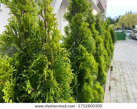 pine tree between concretes so good Stok fotoğraf ©