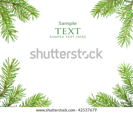 Pine tree branch isolated on white backgrond #42537679