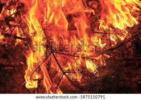 pine tree branches burn and flaming branches and leaves reveal wonderful details. It can be used in contents such as fire, campfire, forest fire. only dry branches were burned.  Foto stock ©