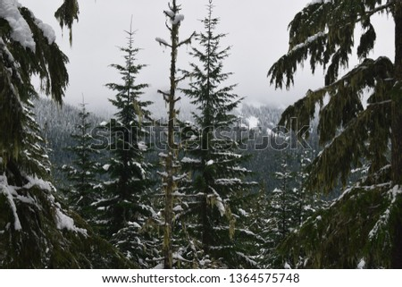 Pine Tree Forest #1364575748