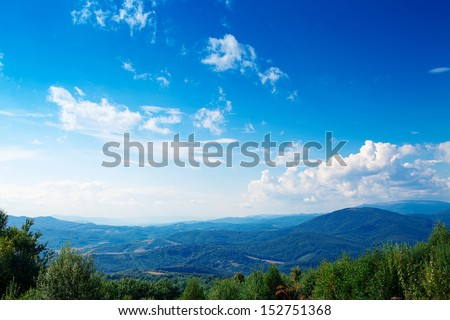Pine tree forest #152751368