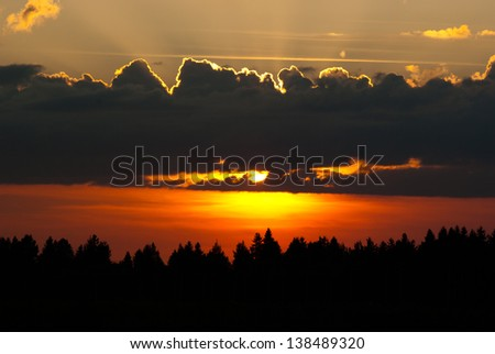pine tree forest in silhouette at colorful sunset
