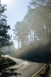 Pine tree forest with mountain road in Dalat, Vietnam. Beautiful landscape of nature at Dalat countryside, street through wonderful pine forest, sunlight through pine tree make amazing scene.