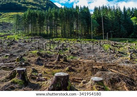 Pine tree forestry exploitation in a sunny day near Glencoe, in the Highlands of Scotland. Stumps and logs show that overexploitation leads to deforestation endangering environment and sustainability. Foto d'archivio ©