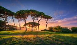 Pine tree group close to sea and beach at sunset. Baratti, Maremma, Piombino, Tuscany, Italy.