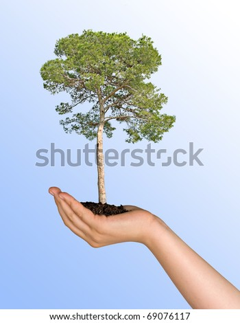 Pine tree in hand as a symbol of nature protection