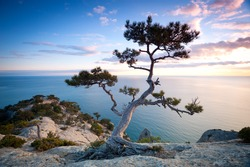 Pine tree on a rocky cliff near the sea at night