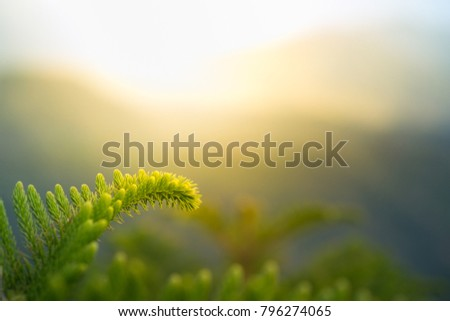 Pine tree on mountainside under sunshine with copyspace #796274065