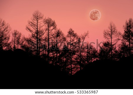 Pine tree silhouette with full Moon in the woods, Surreal scenery of Nature