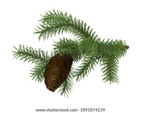 Pine Tree Sprig 3D illustration on white background Stock fotó ©