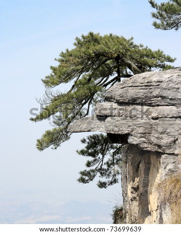 pine tree stand towering on the cliff in lushan,China