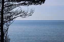 Pine tree with pine cone silhouette with calm blue sea waves and clear blue sky. the horizon.