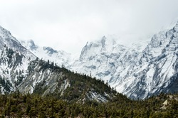 Pine trees against a snow capped mountain on an overcast day, Annapurna Circuit, Nepal