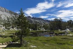 Pine trees and bare granite rocks lie under deep blue alpine skies in the high sierra