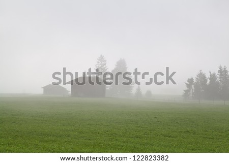 pine trees and two buildings in morning fog