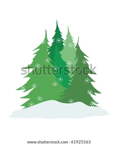 pine trees at Christmas time