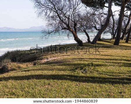 Pine trees by the sea in Playa de Muro Beach in Mallorca, Balearic Islands Foto d'archivio ©