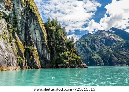 Pine trees climb upward along a sheer granite cliff wall along Tracy Arm Fjord in Alaska.